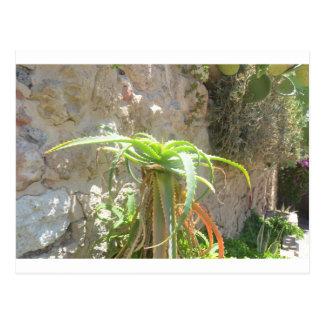 Aloe Plant. Postcard