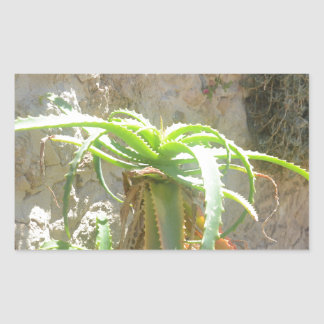 Aloe Plant Rectangular Stickers