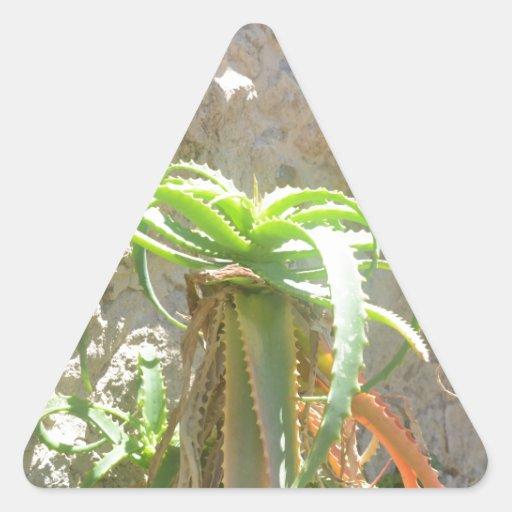 Aloe Plant. Sticker