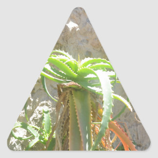 Aloe Plant. Triangle Sticker