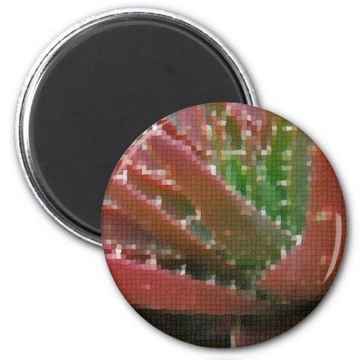 Áloe Rojo-Verde 2 del mosaico Imán Redondo 5 Cm