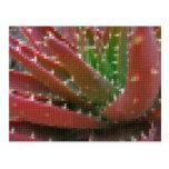 Áloe Rojo-Verde 2 del mosaico Postales