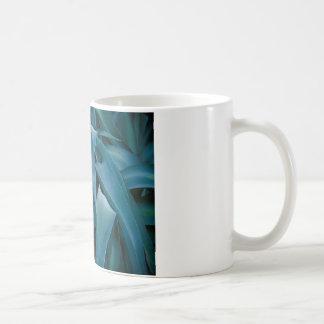 Áloe Tazas De Café