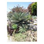 Aloe Vera Cactus Postcard