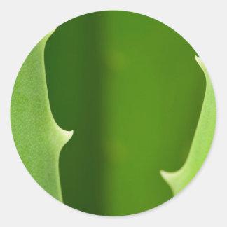 Aloe Vera Classic Round Sticker