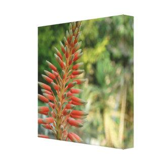 Aloe Vera Flower Blossom Photo  Print