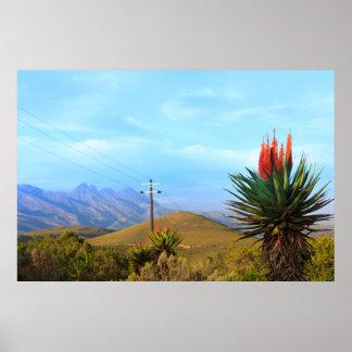 Aloe Vera on Baviaanskloof, Eastern Cape Poster