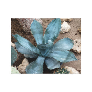 Aloe Vera Plant Photo Wrapped Canvas Print