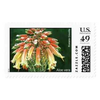 Aloe vera postage stamp