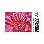 Aloe Vera Postage Stamps