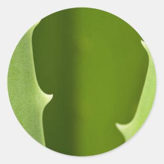 Aloe Vera Round Sticker