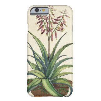 "Áloe Vera vulgaris, de ""Phytographia Curiosa"", p Funda De iPhone 6 Barely There"
