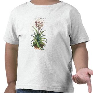 "Áloe Vera vulgaris, de ""Phytographia Curiosa"", p Camisetas"