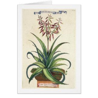Aloe Vera Vulgaris, from 'Phytographia Curiosa', p Card