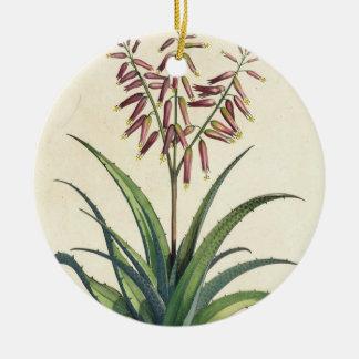Aloe Vera Vulgaris, from 'Phytographia Curiosa', p Ceramic Ornament