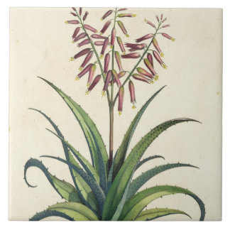 Aloe Vera Vulgaris, from 'Phytographia Curiosa', p Ceramic Tile