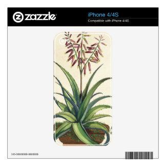 Aloe Vera Vulgaris, from 'Phytographia Curiosa', p Decal For iPhone 4
