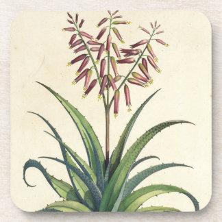 Aloe Vera Vulgaris, from 'Phytographia Curiosa', p Drink Coaster