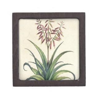 Aloe Vera Vulgaris, from 'Phytographia Curiosa', p Gift Box