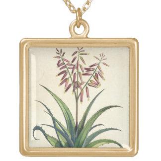 Aloe Vera Vulgaris, from 'Phytographia Curiosa', p Gold Plated Necklace