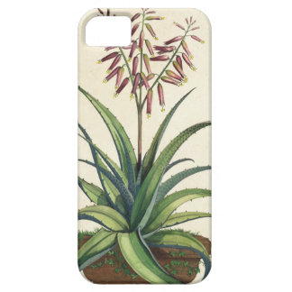 Aloe Vera Vulgaris, from 'Phytographia Curiosa', p iPhone SE/5/5s Case