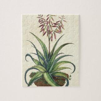 Aloe Vera Vulgaris, from 'Phytographia Curiosa', p Jigsaw Puzzle