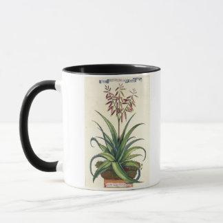 Aloe Vera Vulgaris, from 'Phytographia Curiosa', p Mug
