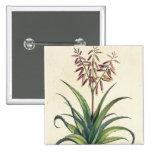 Aloe Vera Vulgaris, from 'Phytographia Curiosa', p Pinback Button