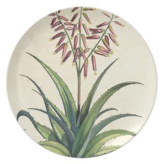 Aloe Vera Vulgaris, from 'Phytographia Curiosa', p Plate