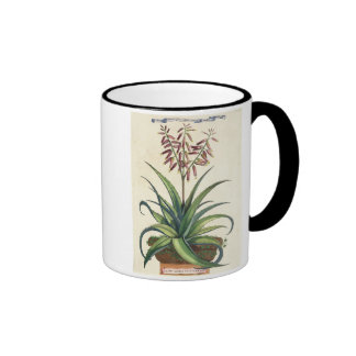 Aloe Vera Vulgaris, from 'Phytographia Curiosa', p Ringer Mug