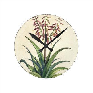 Aloe Vera Vulgaris, from 'Phytographia Curiosa', p Round Clock