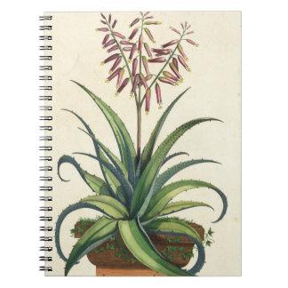 Aloe Vera Vulgaris, from 'Phytographia Curiosa', p Spiral Notebook