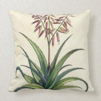 Aloe Vera Vulgaris, from 'Phytographia Curiosa', p Throw Pillow