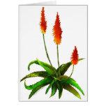Aloe watercolor card