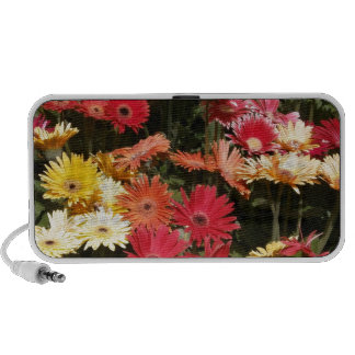 Aloha  Floral Luau Flowers Party Shower Office Art Notebook Speakers
