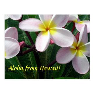 """Aloha from Hawaii"" Postcard"