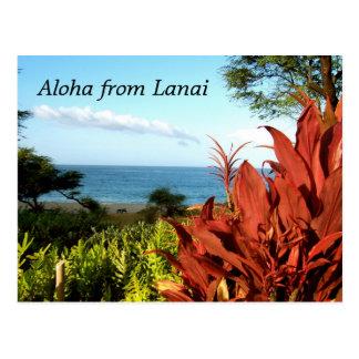 Aloha from Lanai Hawaii Postcard