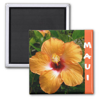 Aloha, Hawaii Hibiscus Magnets