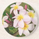 Aloha Hawaiian Frangipani Blossoms Bridal Shower Coasters