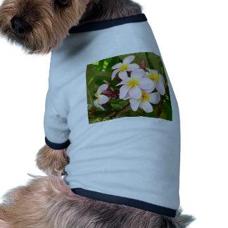 Aloha Hawaiian Frangipani Blossoms Bridal Shower Pet Tee Shirt