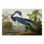 Alondra de la orilla - pintor Juan Audubon de la f Póster