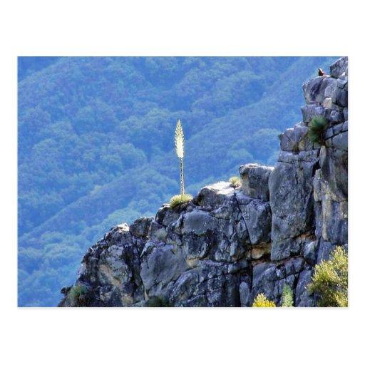 Alone Flower On Cliffs Postcard