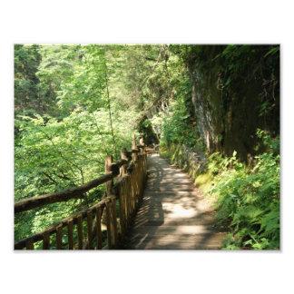 Along the Ridge 11 x 8.5 Photographic Print