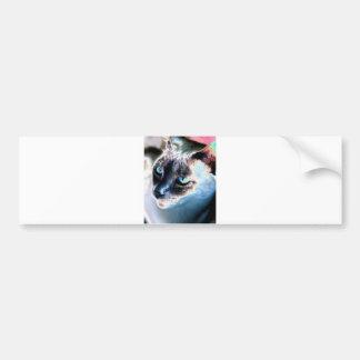 Aloof Siamese Cat Altered Bumper Sticker