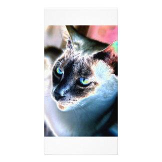 Aloof Siamese Cat Altered Photo Card I