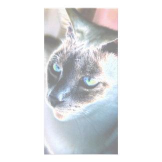 Aloof Siamese Cat Altered Photo Card II