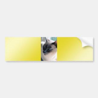 Aloof Siamese Cat Bumper Sticker Car Bumper Sticker