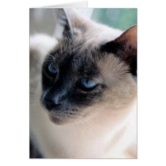 Aloof Siamese Cat Card (Blank Interior)