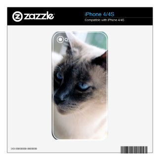 Aloof Siamese Cat Electronics Skin iPhone 4 Skins