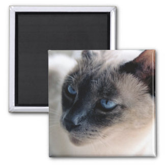 Aloof Siamese Cat Magnet